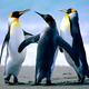 Penguins micro