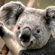 Koala micro