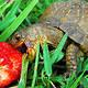 Tartaruga micro